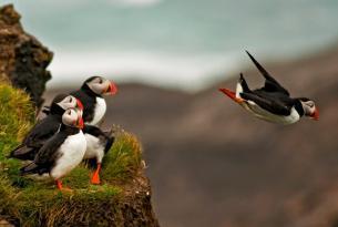 Islandia. Viajeros del Fuego y del Hielo