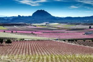 Paisajes de Murcia: Floración de Cieza, Calblanque, Mar Menor, Valle de Ricote
