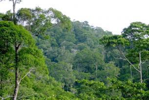 México y Guatemala: expedición Guathemallan