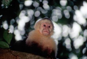 Costa Rica - Parques Nacionales 2015