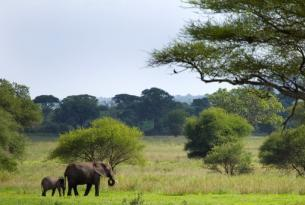 Tanzania: Expedición Natron 2015