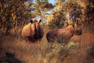 Sudáfrica: Ruta Jardín y Parque Kruger 2015