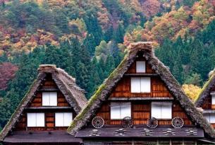 Japón: cedros y bambús
