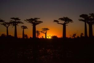 Madagascar: Especial Tsingys