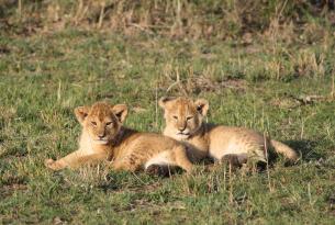 Kenia: Safari Tembo