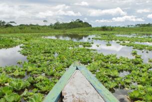 Selva de Perú: Iquitos