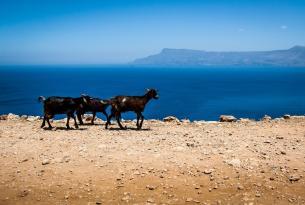 Creta a tu aire: Senderismo de costa a costa