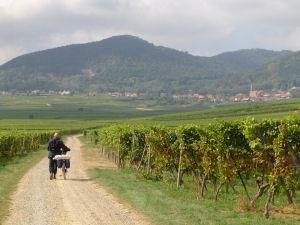 Francia: Ruta del vino en bicicleta