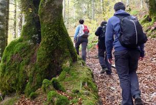 Senderismo por bosques Mágicos: Hayedo de Montejo
