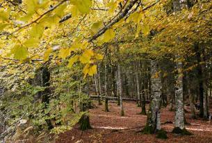 Senderismo por bosques mágicos: Hayedo de Tejera Negra