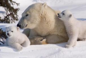 Tierra invernal: explorando la Laponia Finlandesa en 7 días