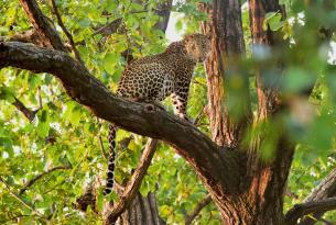 Tour de vida salvaje en la India