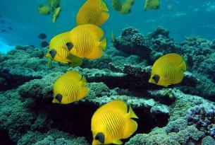 Viaje buceo Mar Rojo Hurgada