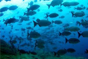 Viaje buceo Canarias El Hierro
