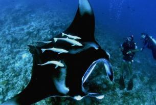 Viaje buceo Maldivas, Ruta Clásica, acompañado desde España