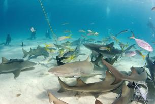 Viaje Buceo Safari Bahamas - Exuma Cays y Eleuthera a bordo del Aggressor