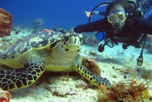 Viaje Buceo México, Cenotes + Cozumel y Arrecifes, excursiones Chichén Itzá y Tulum