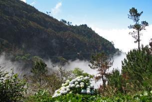 Puente de diciembre en Madeira