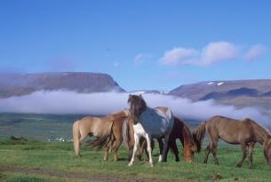 Islandia en familia (en coche de alquiler a tu aire)