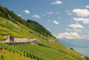 Lo mejor de Suiza y Selva Negra en grupo