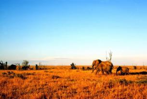 Kenia con Aberdare, lagos Nakuru y Naivasha y Masai Mara (Especial Semana Santa)
