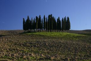La Toscana en grupo para Singles: Florencia, Pisa, Chianti, Cinqueterre, San Gimignano y más
