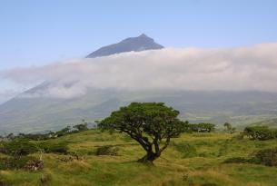 Terceira, Faial y Pico: combinado ganador en las Azores