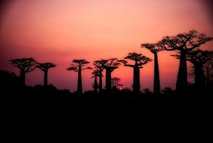 Madagascar al completo en grupo (21 días)