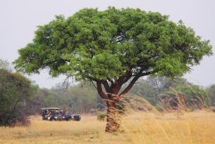 Sudáfrica: la famosa Ruta Jardín con safari en Kruger y Addo