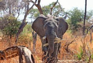Semana Santa de safaris en la reserva privada de Sebatana