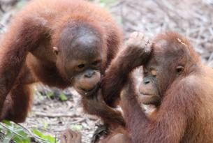 Indonesia: Borneo Inédito en grupo