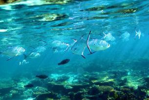 Costa de coral de Australia Occidental en coche de alquiler
